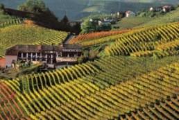 Vacaciones en Piemont rodeado de viñas